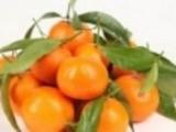 感冒咳嗽能吃橘子吗