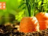 胡萝卜的功效与作用有哪些_详细介绍吃胡萝卜的好处!