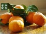 风寒感冒咳嗽食疗_治疗风寒感冒咳嗽最有效的食疗法!
